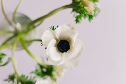 View More: http://katherineelizabethphotography.pass.us/3919-violet-floral-brand-shoot